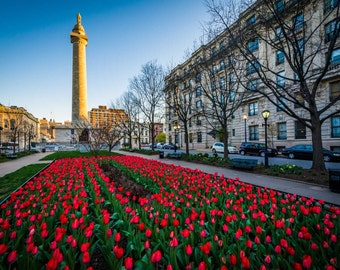 Tulips and the Washington Monument, in Mount Vernon, Baltimore, Maryland.   Photo Print, Stretched Canvas, or Metal Print.