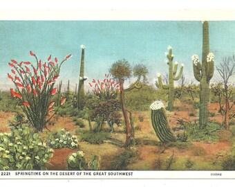 Springtime on the Desert of the Great Southwest  vintage postcard 1937