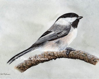 Black Capped Chickadee Print, Realistic Bird Art, Bird Watercolour Painting, A4 or A5 Size