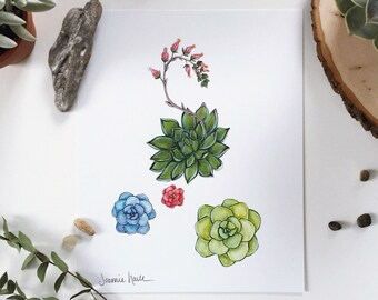 With succulent botanical displays, arffiche cactus to put in a frame, printed illustration