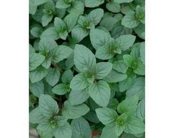 Peppermint- 100 seeds