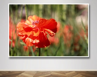 Photograph - Orange Yellow and Red Poppy Field Rays of Sunshine Flower Fine Art Photography Print Wall Art Home Decor