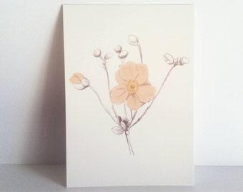 postcards flowers illustrated, illustration, cute, nature