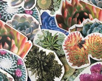 Succulent Sticker Pack (7)