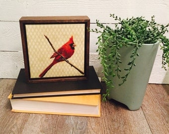 Framed Canvas Bird Print by Andrea Holmes