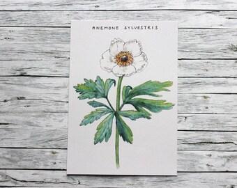 Postcard - Anemone - Vintage Flowers - pen&alex