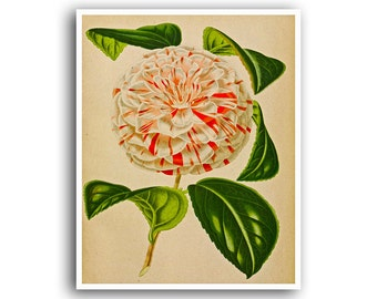 Botanical Art Print Rose Mums Carnation Flower Poster Floral Art Print Plant Wall Decor Botanical 21
