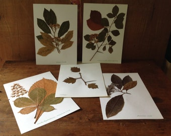 Herbarium, 400 tree leaves gathered in the 80'