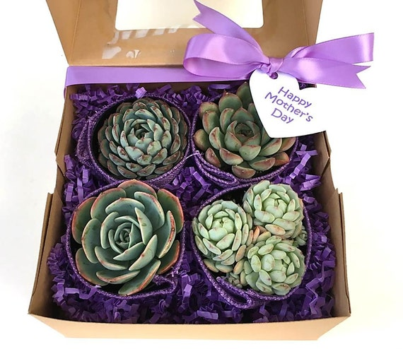 Purple Succulent Gift Box Mother 39 S Day By Succulentsandmore1