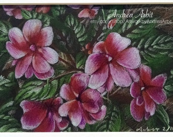 """Pink Impatiens - 5""""x7"""" Colored Pencil Drawing"""