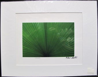 R. Lewis Hooten Uncommon Images Photograph Licuala grandis Signed and Matted