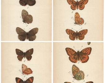 Vintage Butterfly print 1939 by Edmund Sandars lifesize pictures, choice of 4 prints BRITISH BUTTERFLIES