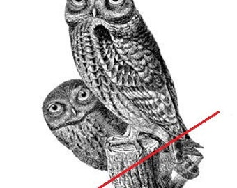 Vintage owls - Temporary tattoo