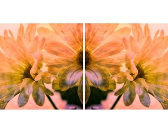 Pink or Blue Daisy Collage