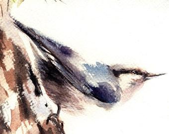 Bird Watercolor Painting Art Print, Bird Painting, Nuthatch Bird, Bird Wall Art, Bird Illustration