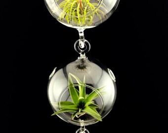 3 Hanging Sphere Terrariums, 3 Air Plants, Simple Terrarium Kit, Hanging Terrarium