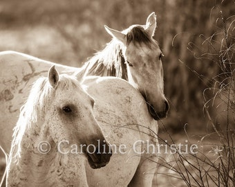 "Horse photo, horse art, horse print.Wild Horse Photo. Title ""Faithfully"""