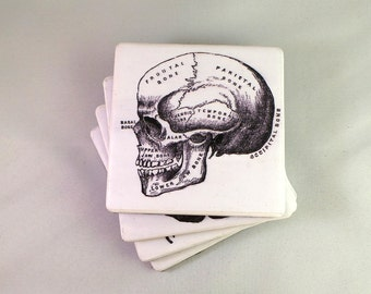 Vintage Anatomy Tile Coasters. Felt Backed, Set of Four, Finished with Twine Bow.