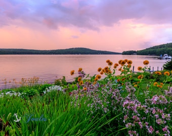 Among the Flowers ~  Meredith, New Hampshire, Church Landing, Lake Photography, Sunset, Wall Decor, Joules, Artwork