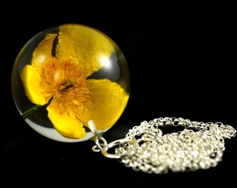 Pendant with natural flower of marsh-marigold (Caltha palustris) in the resin sphere on a silver chain. Sphere 3.4 cm. Chain 80 cm.