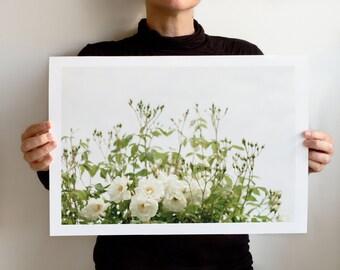 Art Print SS2016 Collection: Efflorescence 2383, Landscape California, Northern California