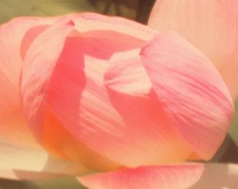 Soft Pink Petals of Beauty