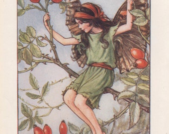 Flower Fairies: The ROSE HIP FAIRY Vintage Print c1930 by Cicely Mary Barker