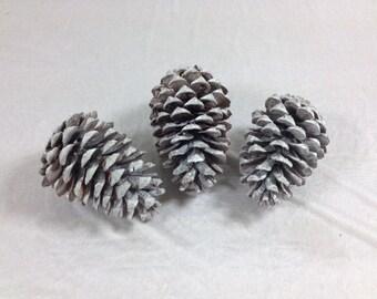 3 Big White Pine Cones Set Of 3 Pine Cones Large Pine Cones
