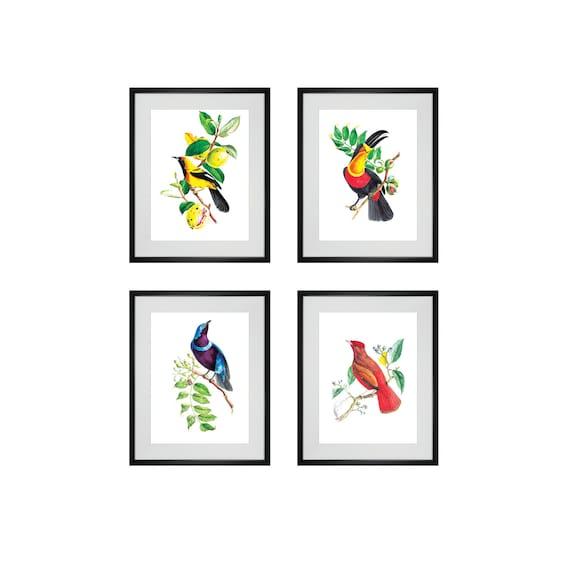 Colorful Kitchen Wall Art: Bird Art Prints Antique Wall Decor 4 Colorful Bird Art Prints