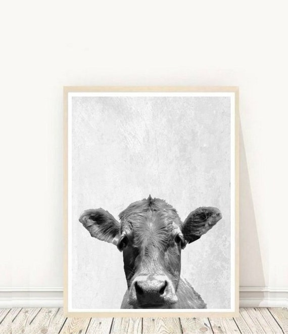 Black And White Cow Names: Identification Chart Of Beef Cattle – pets