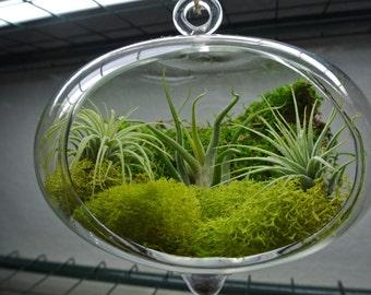 Oval Air Plant terrarium