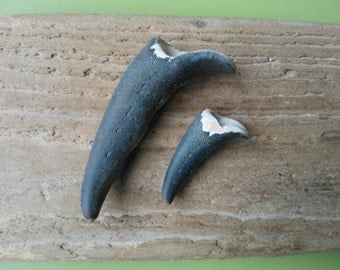 Crab claws , beach finds , beachcombed crab claws , craft supplies