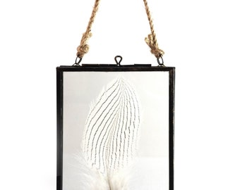 Silver pheasant feather in a hanging glass frame.