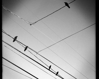 Birds on Wires - BW Print
