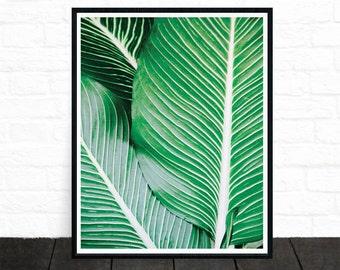 Palm Frond, Leaf Print, Palm Print, Green Leaf, Tropical Plant Print, Modern Photography, Tropical Decor, Minimalist, Wall Decor, Printable
