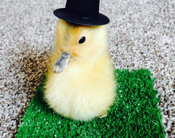 Taxidermy Duckling in Top Hat