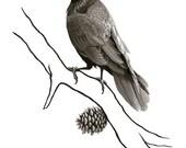 Young Raven Ink Illustration Print