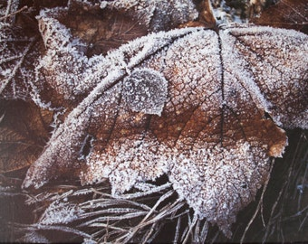 Nature photography - frozen autumn leaf - large print - modern art - brown leaf - modern home decor - frosted winter scene - wrapped canvas