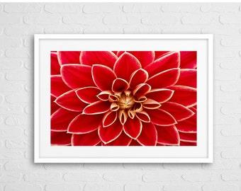 Red Dalia Art Photo Framed