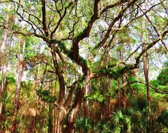 Tree (PRINT)