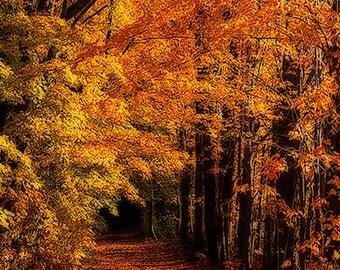 Fall, Trees, Path, Trail, Battles Farm, Yellow House,  Orange, Yellow, Girard, Pennsylvania, PA