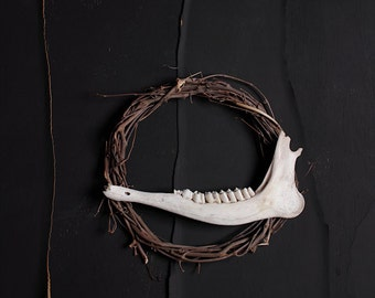Gently Smiling Jaws - FREE SHIPPING Surreal Photo Print Fine Art Nature Dark Still life image Creepy Jaw bone from animal Vine Wreath Brown