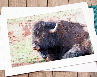 "Relaxing Warrior Buffalo Fine Art Photography Note Card, Bison, Custer State Park, Black Hills, South Dakota, Nature, Animal - 7"" by 5"""