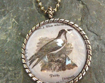 Tern - vintage dictionary illustration pendant necklace