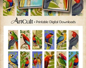 Printable Download Digital Collage Sheet PARROTS  1x2 inch size images for domino pendants, magnets, bezel cabs paper scrapbooking ArtCult