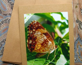 Beautiful SPOTTED BUTTERFLY CARD -  Lovely Insects, Insect, Butterflies, 5 by 7 Nature Photo Photograph Note Cards, Entomology Checkerspot