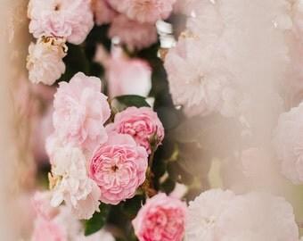 Pink Roses Photo, Flower Art Print, Pink Flower Photo, Spring Decor, Pink Decor, Flower Wall Decor, Inspiration,Floral Wall Decor,Pink Blur
