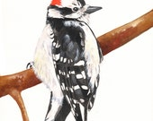 Woodpecker print of watercolour painting A4 size medium print - WP7715