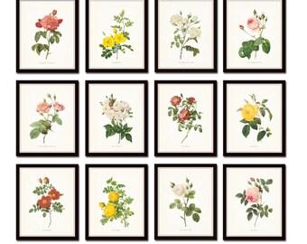Redoute Roses Print Set No.22, Botanical Print, Giclee, Art Print, Gallery Wall Art, Flowers, Rose Prints, Illustration, Redoute Rose Prints