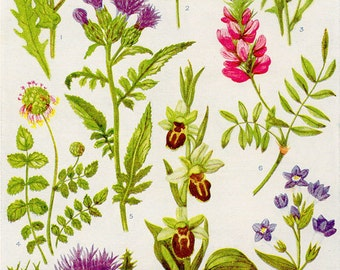 Vintage Botanical Prints - Flowers of the Hedgerows - 1933 Lithographs For Framing